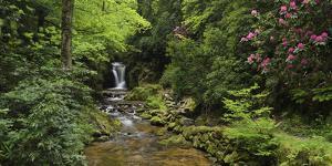 Germany, Baden-Wurttemberg, Black Forest, Grobbach, Geroldsauer Waterfall by Andreas Keil