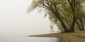 Germany, North Rhine-Westphalia, Cologne, Pastures on the Rhine Shore Beside the Zoo Bridge in Fog by Andreas Keil