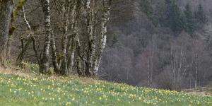Germany, North Rhine-Westphalia, Rur Eifel (Local Recreation Area by Andreas Keil