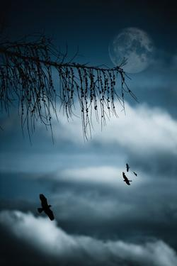 Composition with Tree, Moon, Clouds and Birds by Andreas Schott (Bonnix)