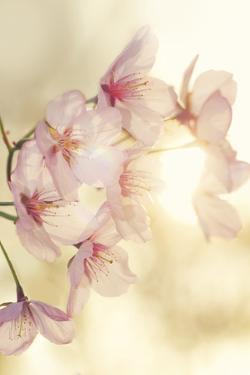 Blossom by Andreas Stridsberg