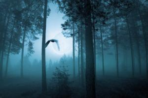 Forest Flight by Andreas Stridsberg