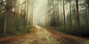 Misty Trail by Andreas Stridsberg