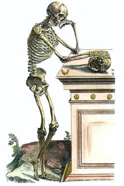 Vesalius: Skeleton, 1543 by Andreas Vesalius