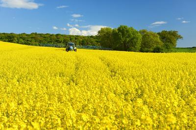 Conventional Agriculture, Farmer Spreading Pesticides on the Rape Field by Tractor