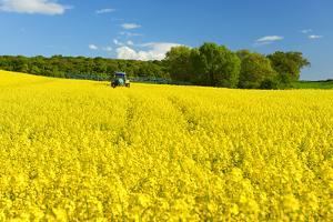 Conventional Agriculture, Farmer Spreading Pesticides on the Rape Field by Tractor by Andreas Vitting