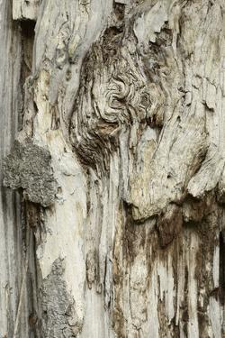 Deadwood, Detail, Fissures and Structures, Stubnitz, National Park Jasmund by Andreas Vitting