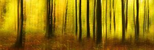 Deciduous Forest in Full Autumn Colours, Abstract Study [M by Andreas Vitting