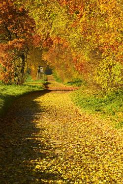 Foliage Covering Footpath at the Edge of a Forest, Ziegelroda Forest, Saxony-Anhalt by Andreas Vitting