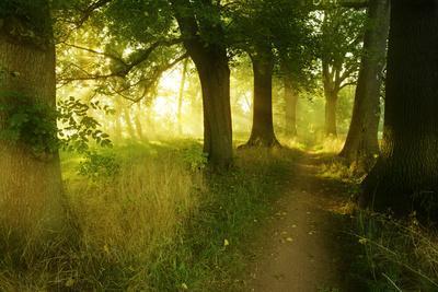 Footpath Through Avenue in the Morning Light, Flower Ground, Burgenlandkreis