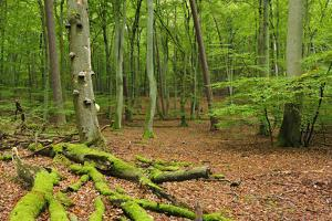 Germany, Mecklenburg-West Pomerania, MŸritz National Park, Forest, National Park by Andreas Vitting