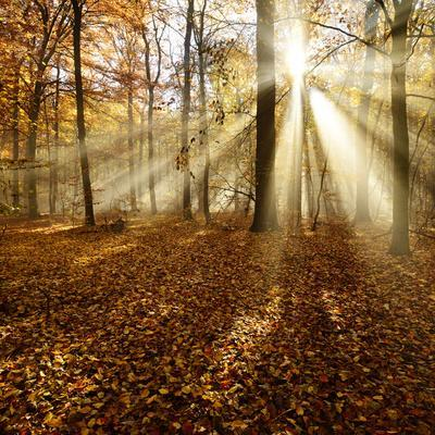 Sunrays and Morning Fog, Deciduous Forest in Autumn, Ziegelroda Forest, Saxony-Anhalt, Germany
