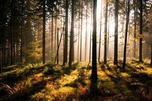 Fall Forest with Sunrays by Andreas Wonisch