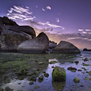 Sea Moss on Coral Rocks at Sunrise by AndreLuu