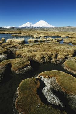 Chile, Altiplano, Payachalas Volcanos, Bofedal Parinacota, Lauca by Andres Morya Hinojosa