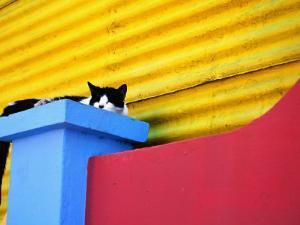 Cat Sleeping in Barrio La Boca by Andrew Bain
