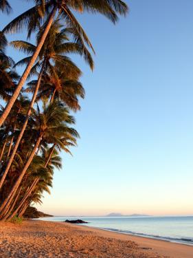 Dawn on Ellis Beach, Near Palm Cove by Andrew Bain