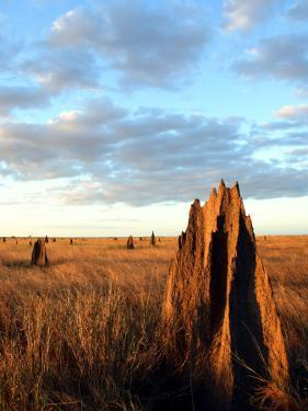 Termite Mounds on the Nifold Plain by Andrew Bain