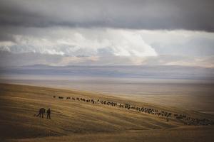 Grassland Grazing by Andrew Geiger