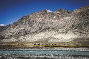 Panoramic Placidness by Andrew Geiger