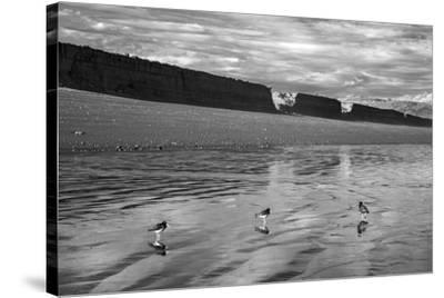 Water Waders