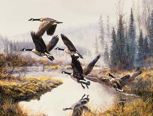 Geese- Fall Flight by Andrew Kiss