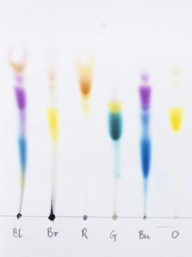 Paper Chromatography by Andrew Lambert