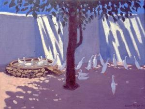 Runner Ducks,South Africa by Andrew Macara