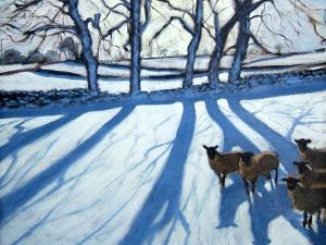 Sheep in Snow, Derbyshire by Andrew Macara
