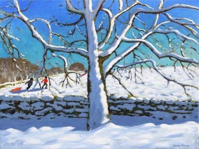 Tree in Winter, Newhaven, Derbyshire, 2017 by Andrew Macara