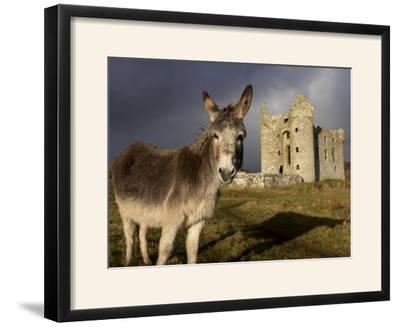 A Donkey Grazes in Front 17th Century Monea Castle, County Fermanagh, Ulster, Northern Ireland