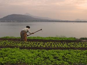 Tending the Crops on the Banks of the Mekong River, Pakse, Southern Laos, Indochina by Andrew Mcconnell