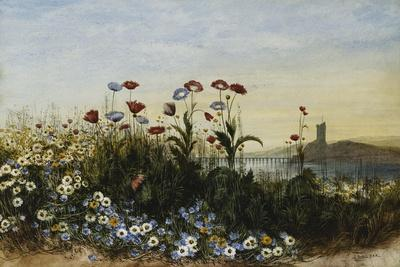 Ferry Carrig Castle, Co. Wexford, Seen Through a Bank of Wild Flowers