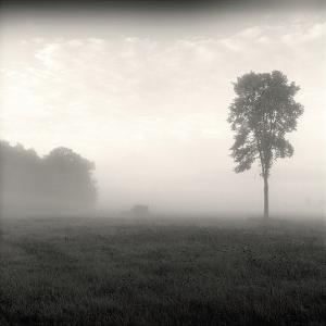 Tree, Study, no. 2 by Andrew Ren