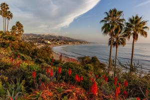 Overlooking Blooming Aloe in Laguna Beach, Ca by Andrew Shoemaker