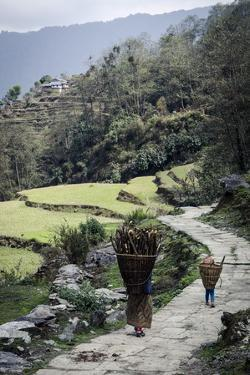 A Woman and Daughter Carry Firewood in Dolkas Back Home to Ghandruk, Nepal, Asia by Andrew Taylor