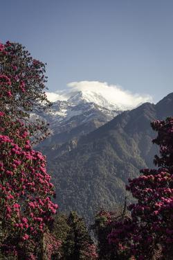 Annapurna South by Andrew Taylor