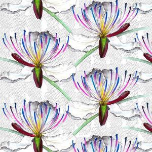 Caper flowers, 2017 by Andrew Watson