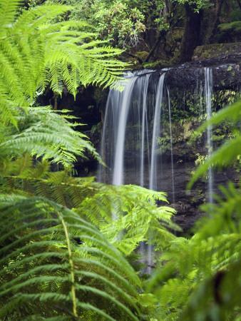 Russell Falls Through Ferns