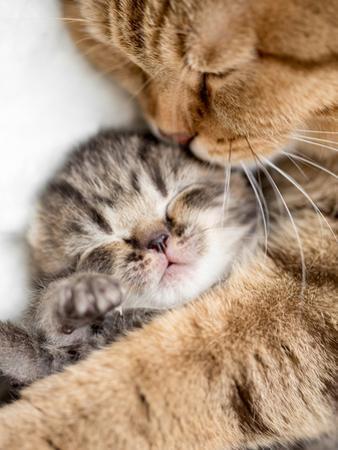 Mother Cat Hugging Little Kitten by Andrey_Kuzmin