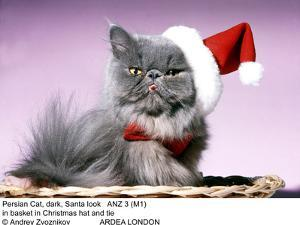 Persian Cat Santa Look in Basket in Christmas Hat and Tie by Andrey Zvoznikov