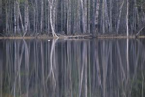 Reflections in a Small Lake in Taiga Forest by Andrey Zvoznikov
