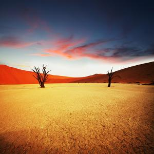 Dead Valley in Namibia by Andrushko Galyna