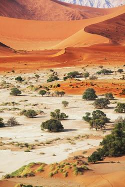 Namib by Andrushko Galyna