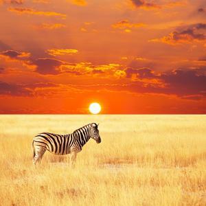 Zebra by Andrushko Galyna
