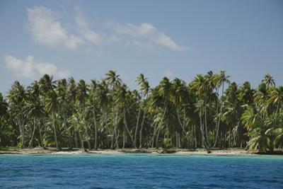 Palm Trees in the French Polynesian Atoll of Ahe by Andy Bardon