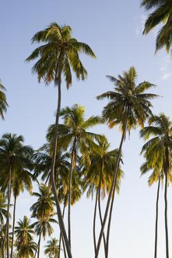Palm Trees on Moorea Island by Andy Bardon