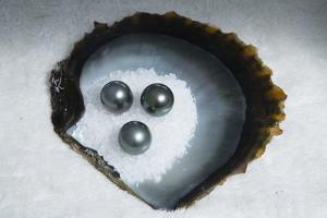 Tahitian Black Pearls on Rock Salt by Andy Bardon