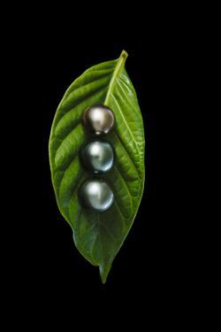Tahitian Black Pearls by Andy Bardon