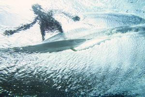 Underwater View of a Surfer on the Water's Surface by Andy Bardon